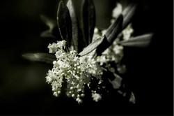 Inizio fioritura 05