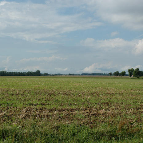 Battlefield of Agincourt