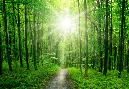 Lumière-forêt.jpg