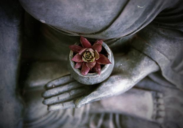 buddha-1277463_1920.jpg