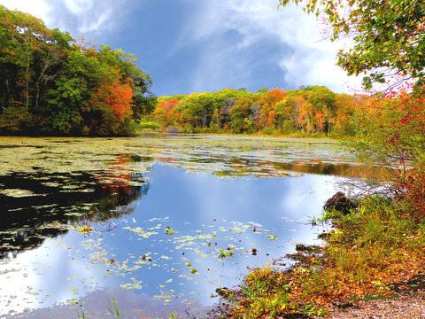 Ellis pond in fall 1.jpg
