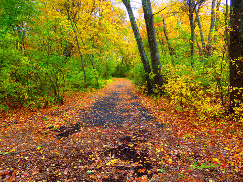 Fall road 1.jpg