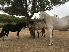 Achim, Killarney und Pegasus