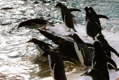 Penguin Pool, Edinburgh