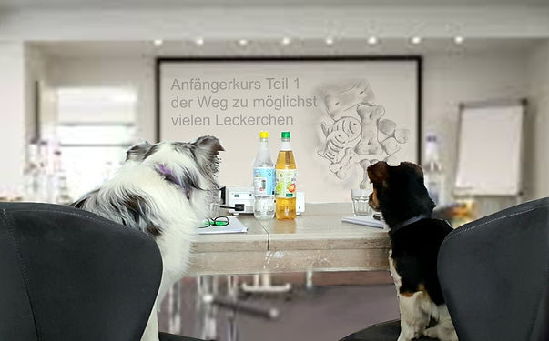 Seminar für hunde.jpg