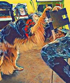 CleverlyDog Denksport für Hunde