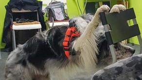 Trickdogs-Training für Fortgeschrittene