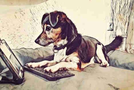 Hundetraining online kann nicht nur zu Corona-Zeiten eine gute Alternative sein.