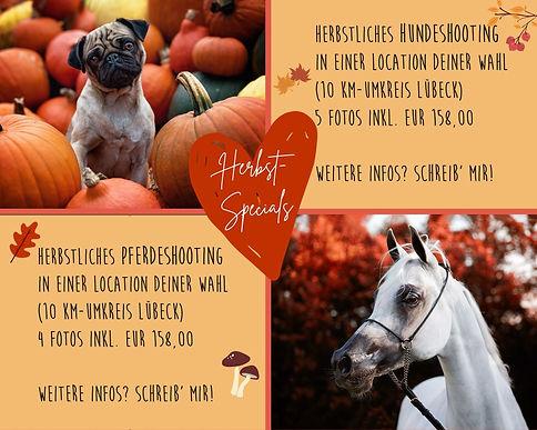 Herbst-Specials.jpg
