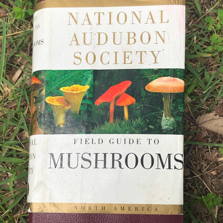 Field Guide to Mushrooms