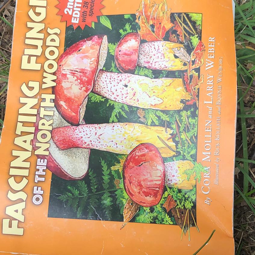 Fascinating Fungi of the North