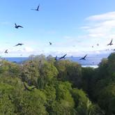 OUR ATOLL SPEAKS.Still023-birdsflying_TA
