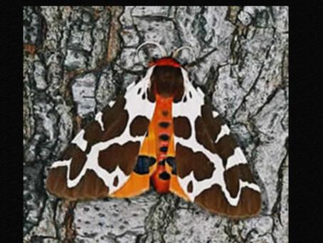 On moths and butterflies