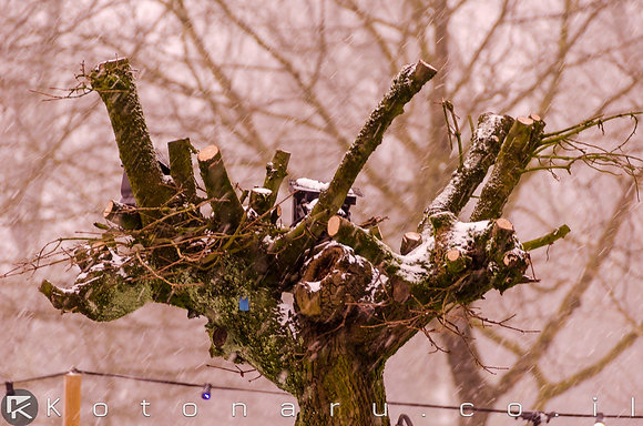 עדיין עץ