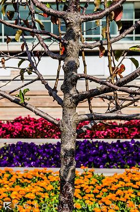קומות של פרחים