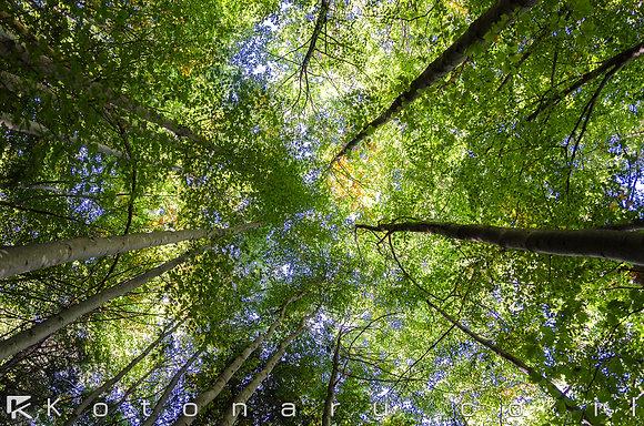 כל העצים מובילים לשמיים