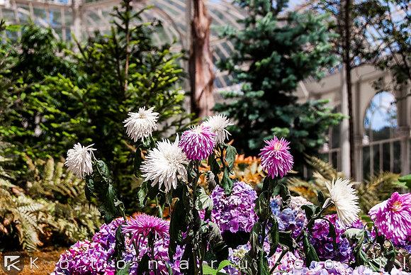 פרחי זכוכית