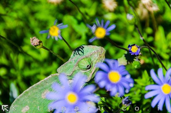 ירוק על ירוק