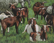 """""""Goats and Sheep"""""""