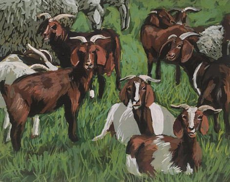 """Goats and Sheep"""