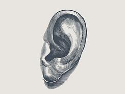 ear-dribbble_2x.jpg