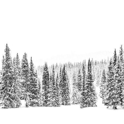 Treeline Snow Metal Print