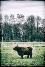 Connor MacLeod of the McLeod clan - Eibergen, The Netherlands