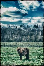 Little Pony, Big Tail - Rekken, The Netherlands