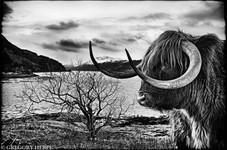 The Highlander - Kyle of Lochalsh, Scotland