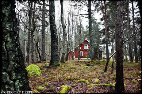 Deep in the Forest - Kallhäll, Sweden