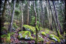 Kallhäll Forest - Kallhäll, Sweden
