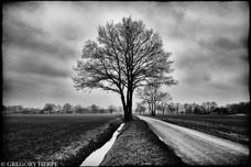 Traveller's Tree - Lichtenvoorde, The Netherlands
