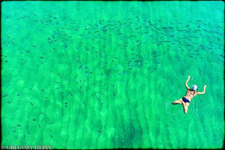 Swimming with Sharks - Badalona, Spain