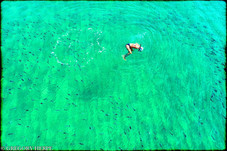 Swimming with Sharks II - Badalona, Spain