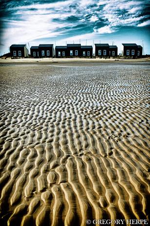 Snakes in the sand - Kamperand Strand, The Netherlands