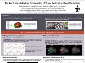 The cortical architecture presentation of visual system functional selectivity