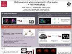 Multi-parametric white matter metrics of rat strains A tractometry study