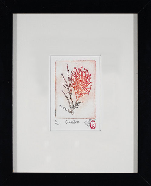 Grevillea. Etching by Pirie Martin.