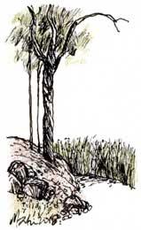 LANDSCAPE 5. Drawing
