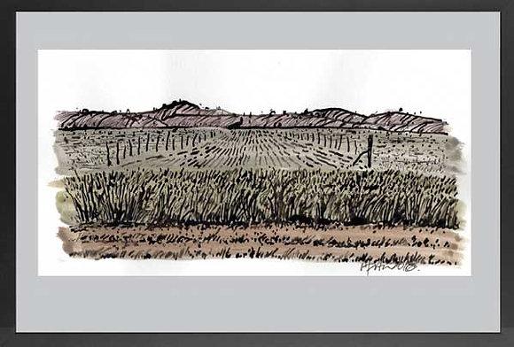 Eudunda Landscape 3