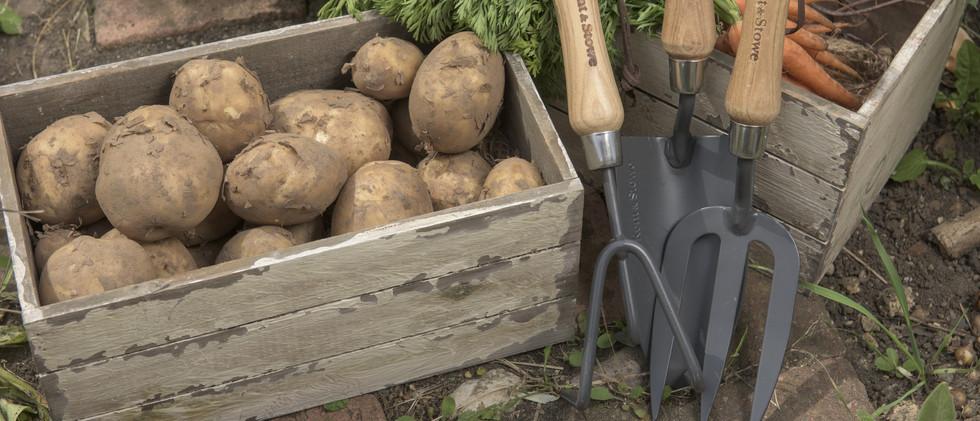 ks-cs-hand-tools-with-vegetables_2996878