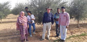 Olives_Rajasthan project