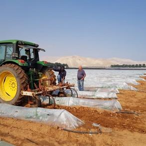 Watermelon field preparation