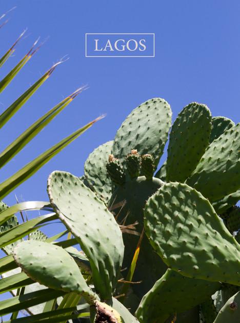 Lagos - City Cactus