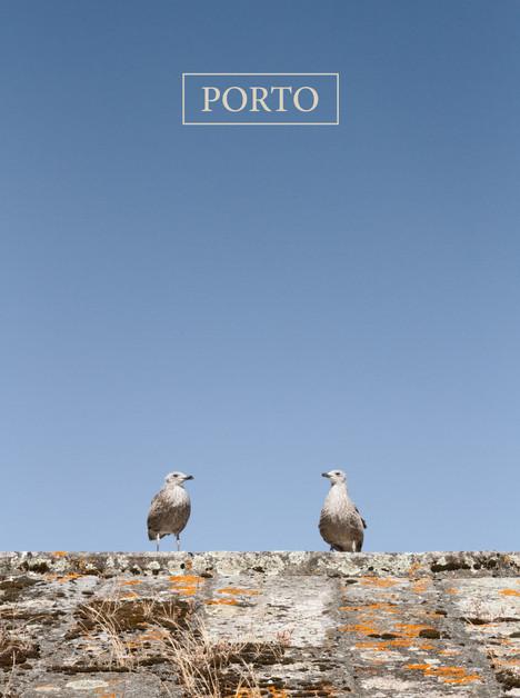 Porto - Porto Cathedral's Birds