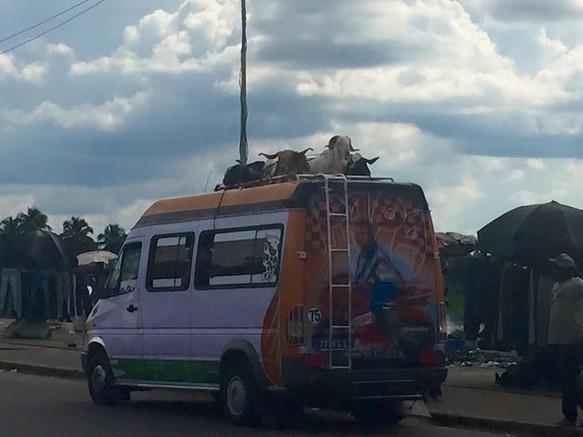Gbaka vervoert schapen