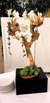 Compo Fleurs, Arômes et Botanique