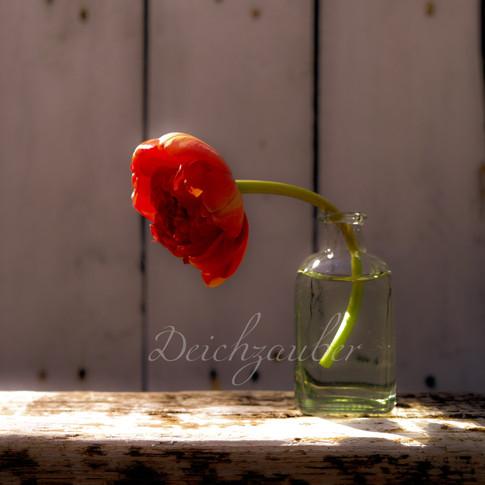Tulpenliebe.jpg