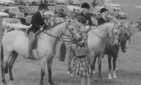 horses 3.jpg