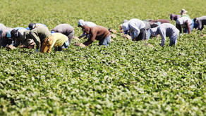 BAME and migrant workers and the broken labour market